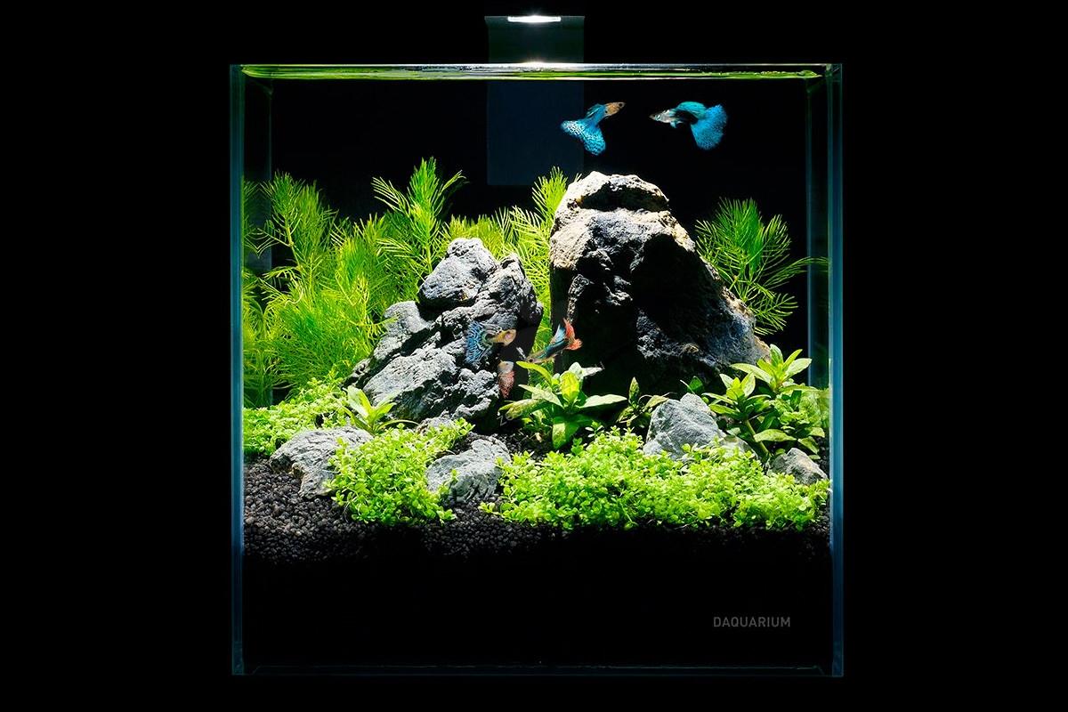Collar Aquarium Set Pico Set - аквариум с пълно оборудване, 17/17/17 см, 5 литра