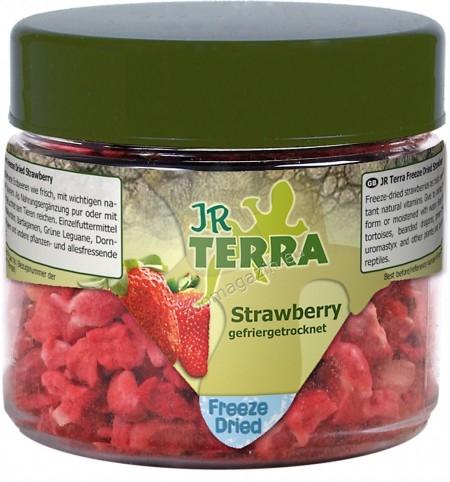 JR Farm Terra Freeze Dried Strawberry - ягоди, храна за сухоземни костенурки, брадати гущери, зелени игуани, бодливи гущери и други всеядни и растителноядни влечуги 10 грaма