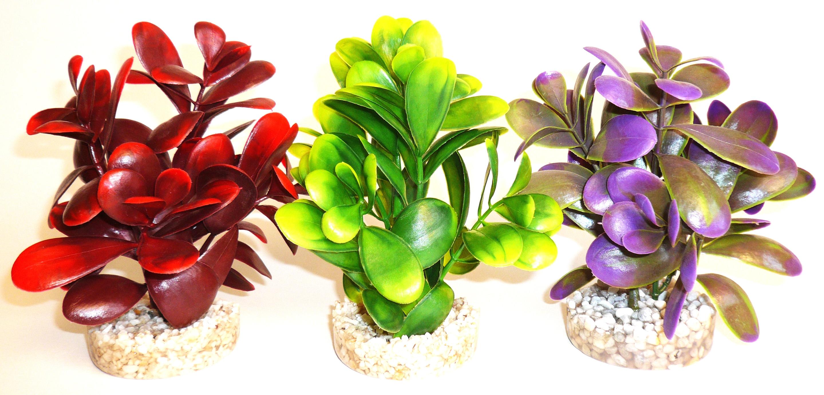 Sydeco Peeble Plant 14 см. / зелено, червено, лилаво /