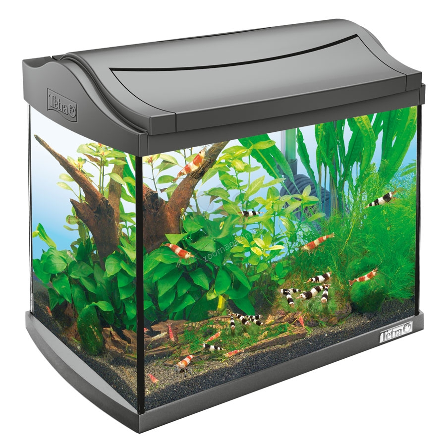 Tetra aquariums online pet shop for Aquarium boule 20 litres