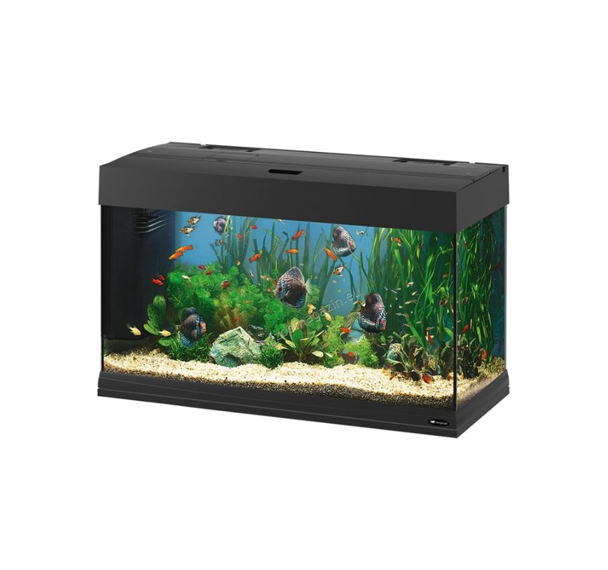 Ferplast dubai 80 black fully equipped aquarium 125 for Aquarium 80 litres