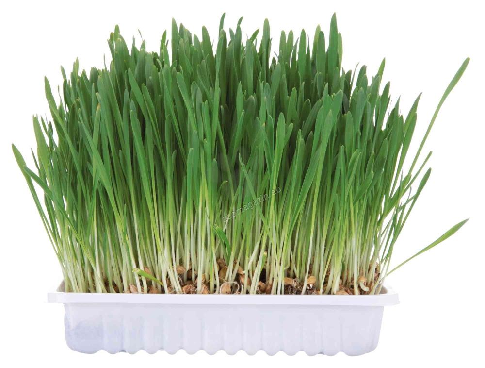 Trixie - Small Animal Grass - свежа трева 100 гр.