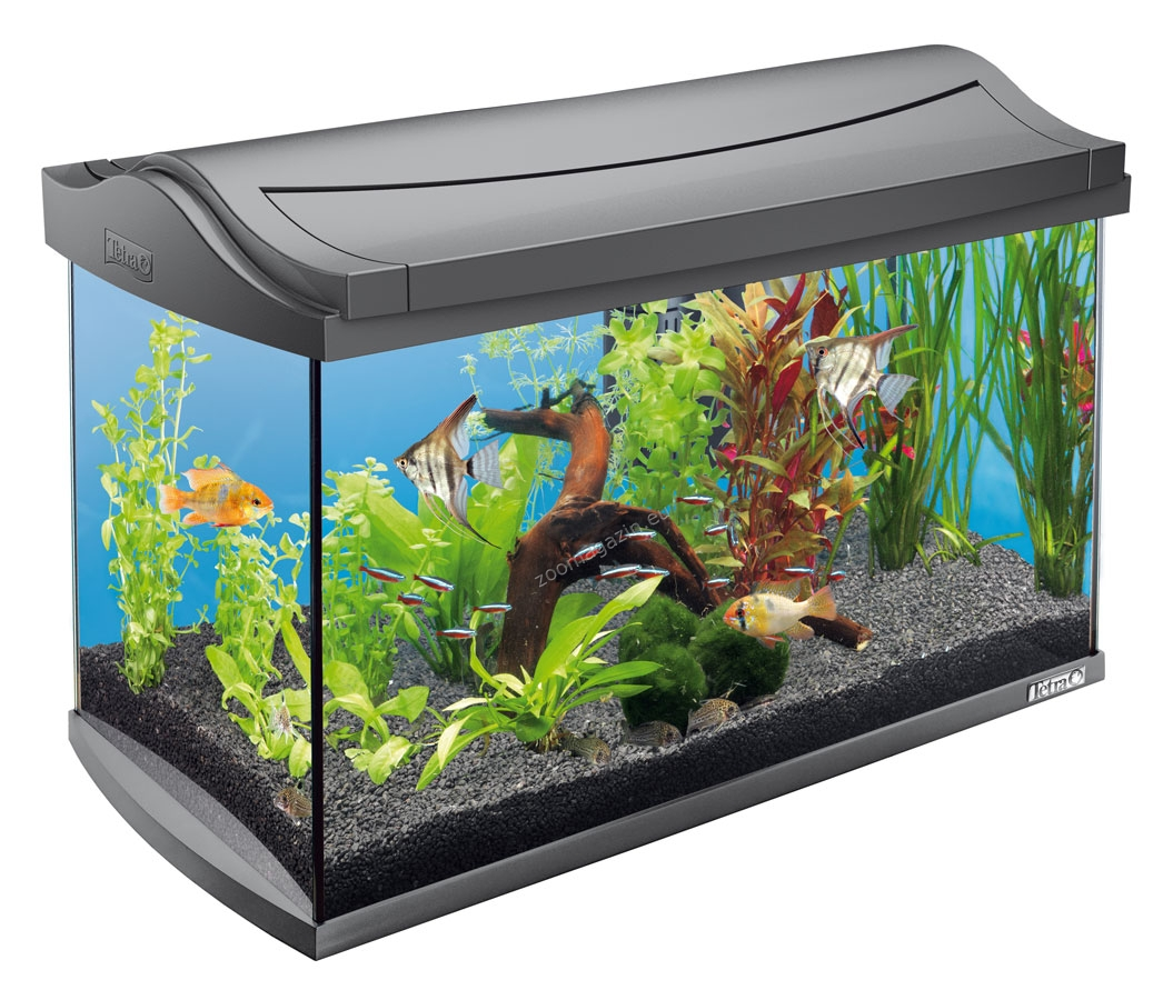 tetra aquaart discovery line aquarium complete set 60l. Black Bedroom Furniture Sets. Home Design Ideas