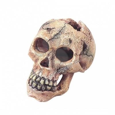 EBI - череп укритие 15 см.